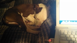 Ruby sleeping by computer