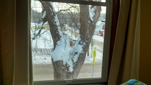 Left window view