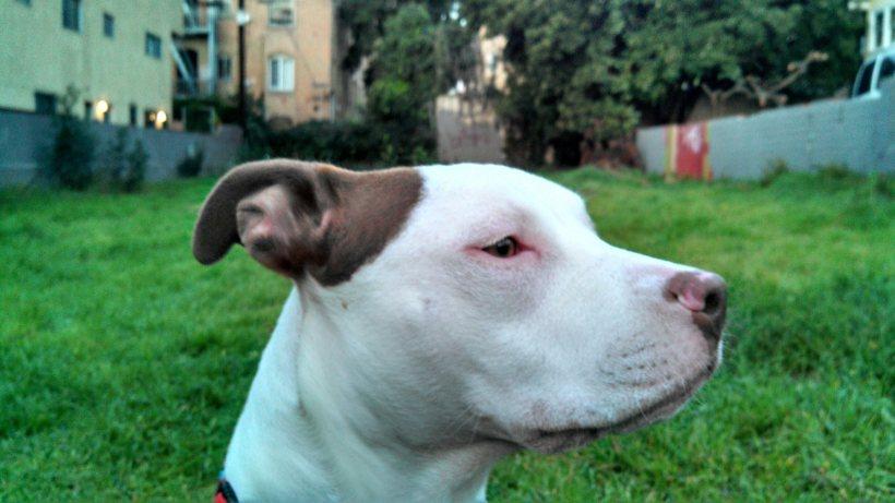 Ruby profile in field