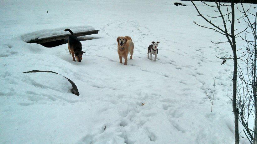 VT doggie daycare dogs