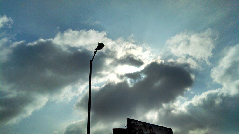 LA - birds on pole