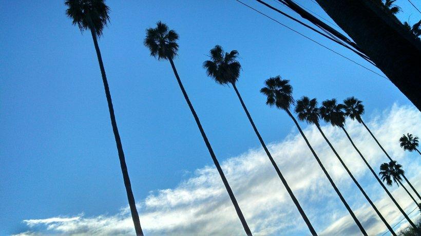 LA - trees