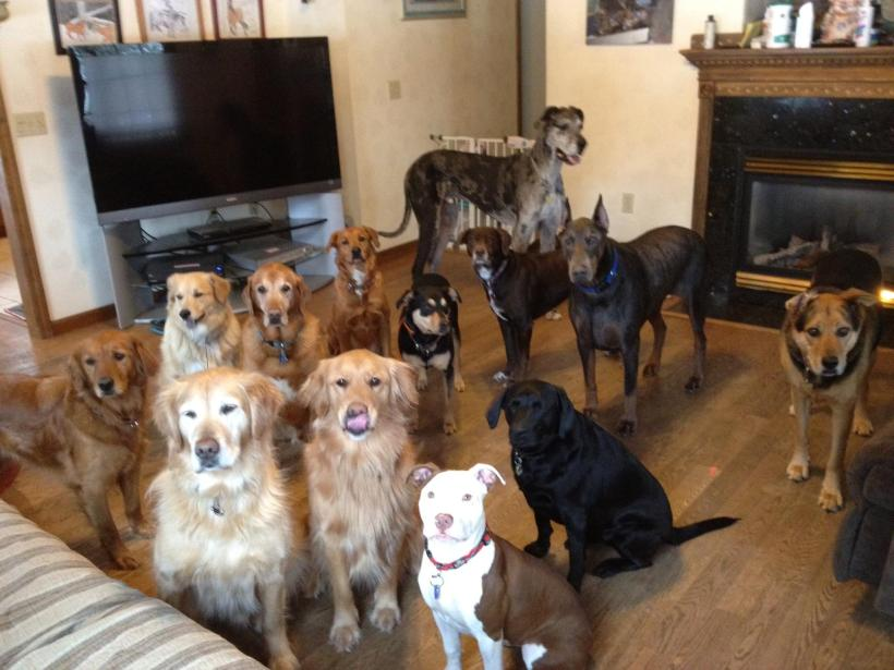photo by Christine Bradley, Mountain Dog Daycare, Johnson, VT