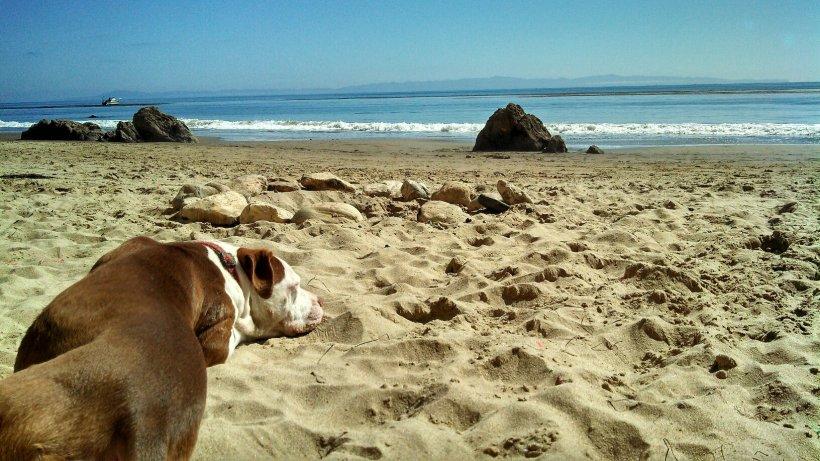 SB - Douglass beach - sleeping dog