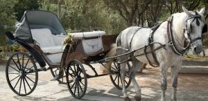 Horse and Carriage [queenvictoria.com]