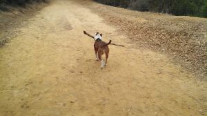 Ruby carrying big stick