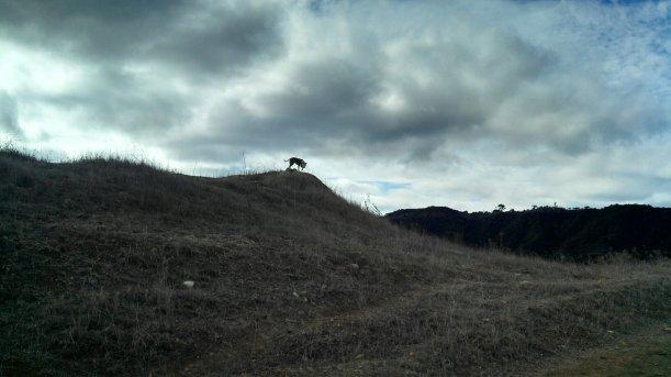 Ruby far away on hill