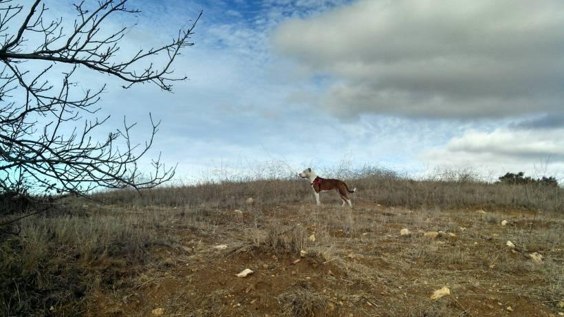 Ruby in field2