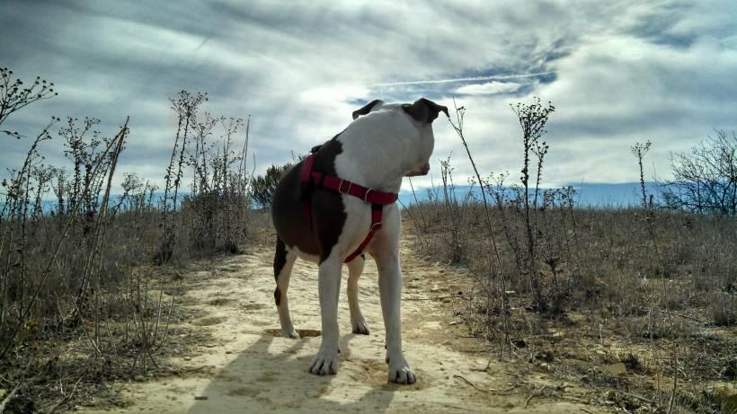 Ruby in field3