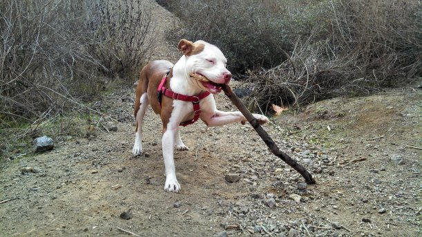 Ruby playing with stick