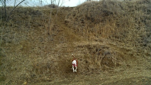 ruby running down hill