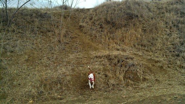 ruby running down hill