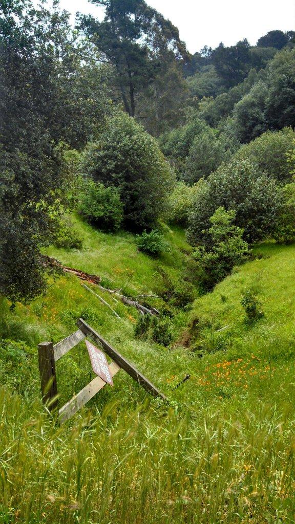 Meadow in Redwood Regional Park (Oakland)