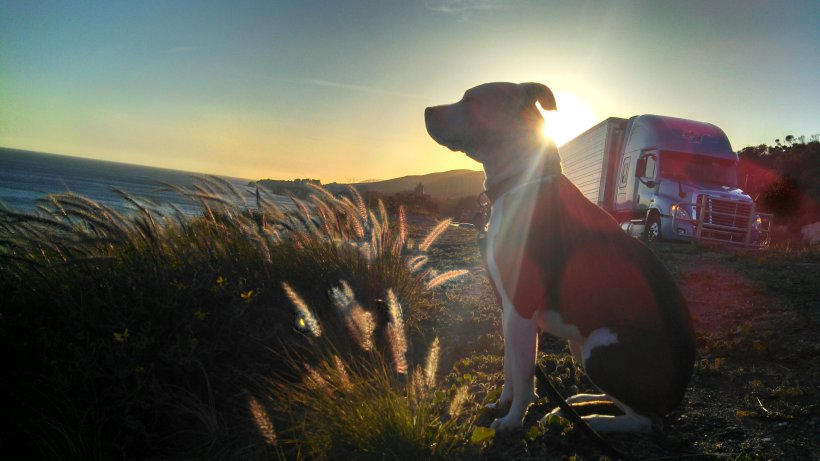 Ruby and her sunset (101 Freeway rest stop)