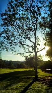 Tree at sunset (photo: @nivaladiva)