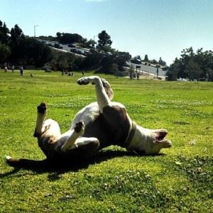 ruby rolling in grass