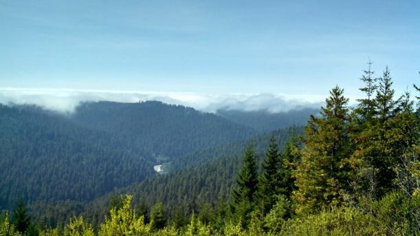 Redwood National Park2