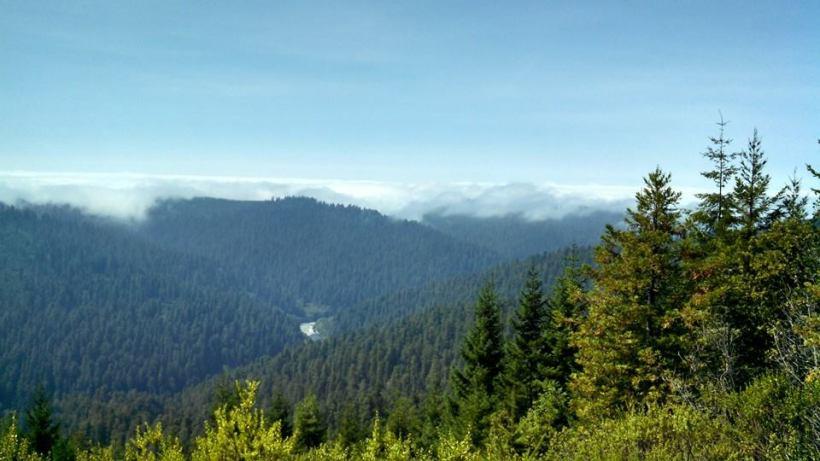 Redwood National Park2
