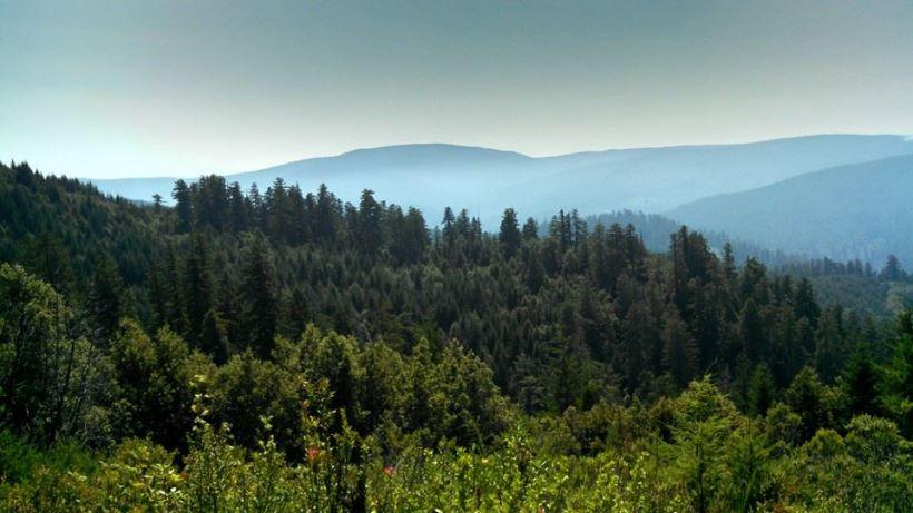 Redwood National Park3
