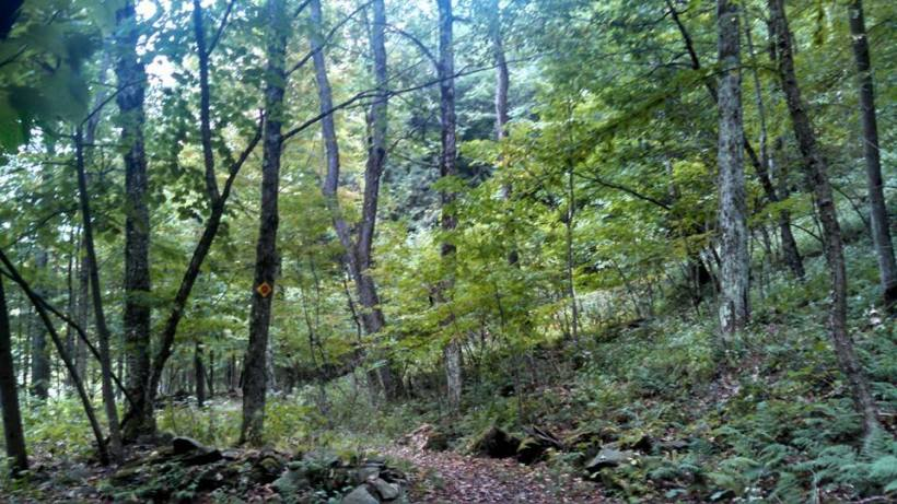 Durham - lush green