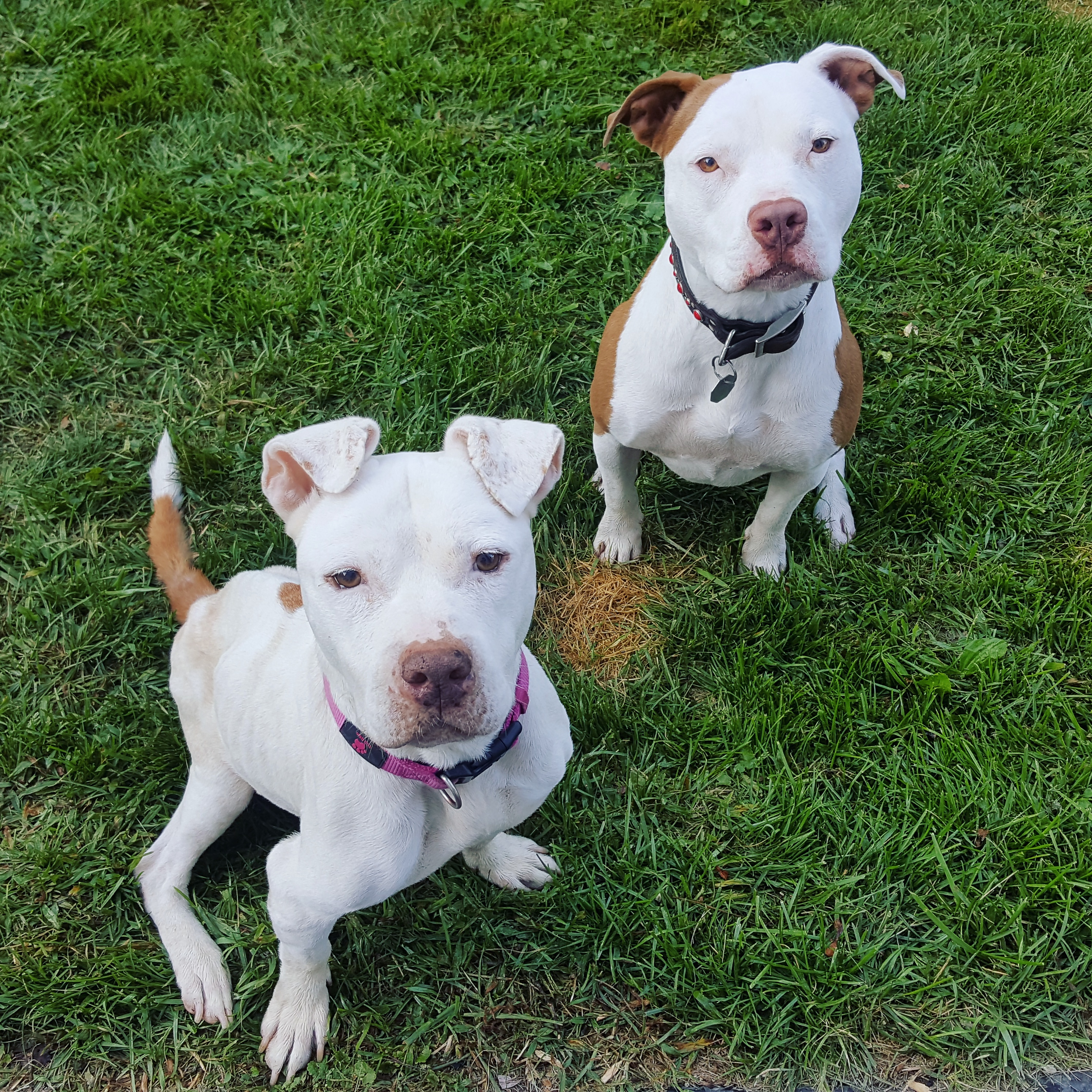 ruby and gracie 1